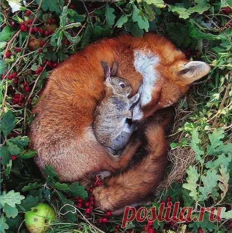 Фото самой необычной дружбы животных
