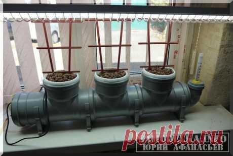 Домашняя гидропонная установка своими руками