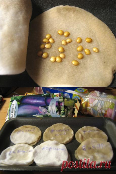 Как ускорить прорастание семян перца и баклажан (новое)