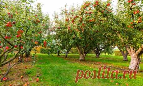 Принципы выбора правильной подкормки для плодовых деревьев | 6 соток
