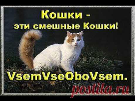 (+1) тема - Кошки - эти смешные Кошки! VsemVseOboVsem. | ВИДЕОСМАК