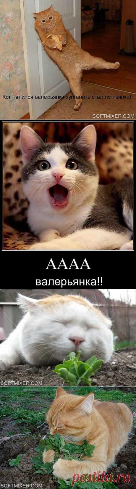 Котики и наркотики… | SOFTMIXER