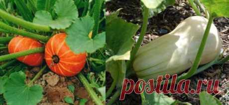 Правильный полив огородных растений