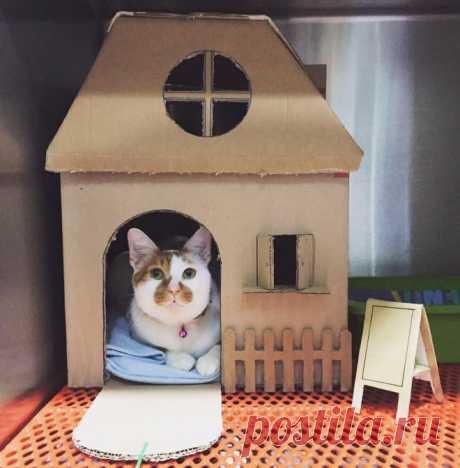 Домик для кошки своими руками из картонной коробки, лежанка для кошки, чертежи с размерами
