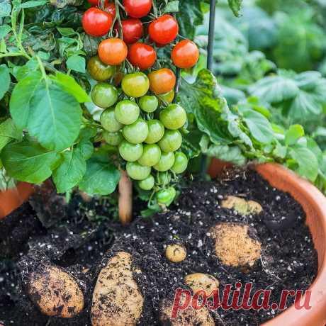 Чудеса селекции — необычные овощи и фрукты
