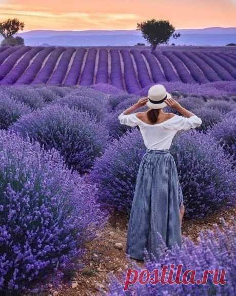 Поля лаванды. Прованс, Франция.