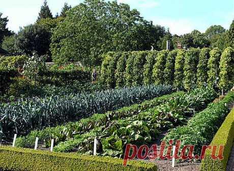 Уплотненные посадки, или какой овощ с каким дружит