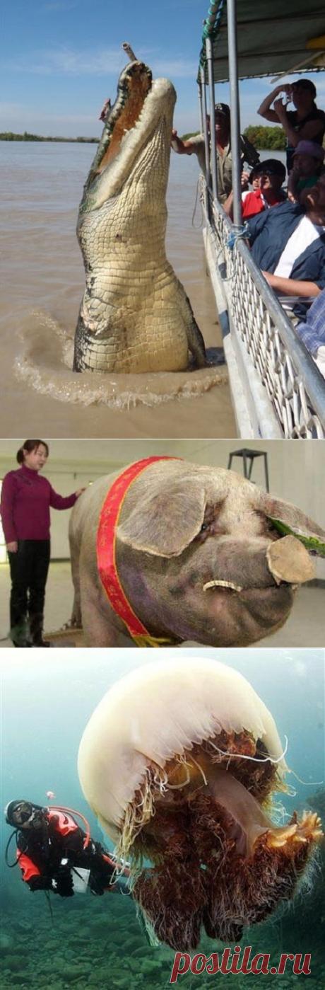 Огромные животные, при виде которых становится не по себе — Наука и жизнь