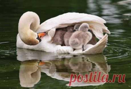 Мамочки любимые!!!!