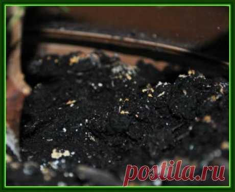 Как бороться с плесенью на почве в цветочных горшках..