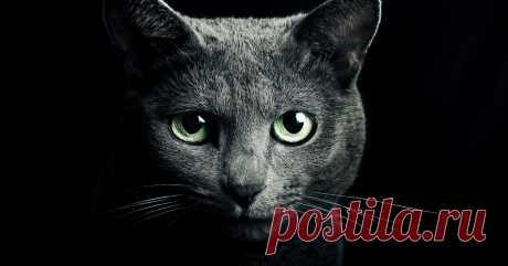 Почему кошки приходят в наш дом Давно известно, что кошки – существа особенные. Они могут находиться одновременно во всех параллельных мирах и способны видеть и чувствовать то, что