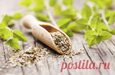 Душица обыкновенная: описание и заготовка травы, другое название