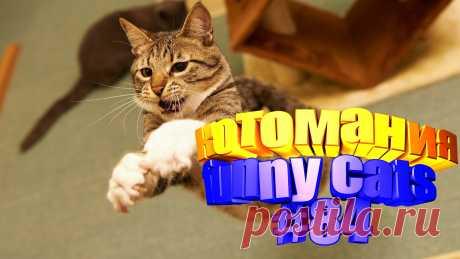 коты смешные видео, коты видео смешное, коты смешное видео, кот смешное видео, кот том видео, для котов видео, видео приколы котов, кот видео, видео с котом, смешные животные видео, видео животных смешные, смешное видео животные, смешно животные, смешное животные, коты приколы, приколы для котов, приколы о кошках, смешные коты, кошки видео смешные, смешная кошка, видео кошек смешное, про кошек смешных, кошки смешное, смешно кошки, видео кошек смешные, смешные кошек, видео кошки, видео о кошках