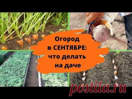 Огород в СЕНТЯБРЕ: что надо успеть сделать. Осенние работы в огороде.Когда убирают морковь и свеклу
