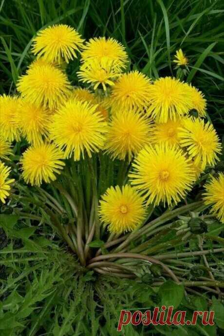 Цветики...цветочки