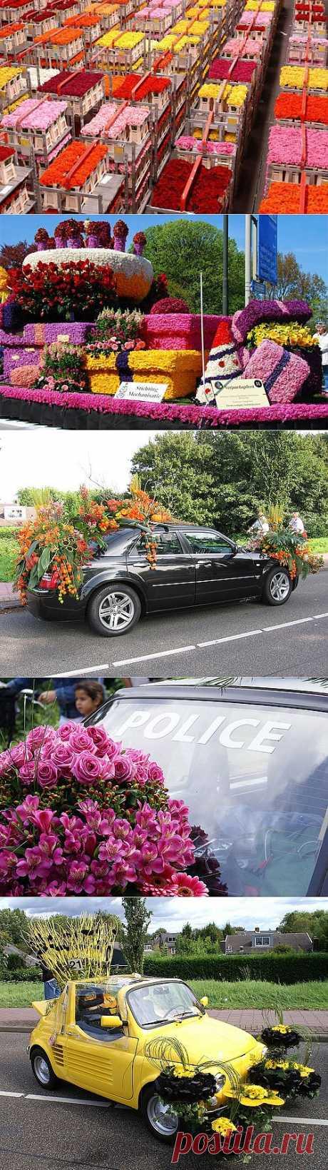 Парад цветов в Аалсмеере (Голландия) - Туристический Клуб