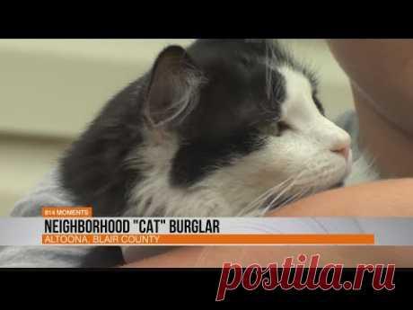 """Neighborhood """"Cat"""" Burglar - YouTube"""