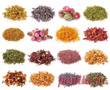 Лечебные чаи от температуры и хронического воспаления в легких и бронхах