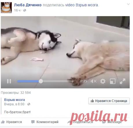 (23) Люба Дяченко - Люба Дяченко поделилась video Взрыв мозга.