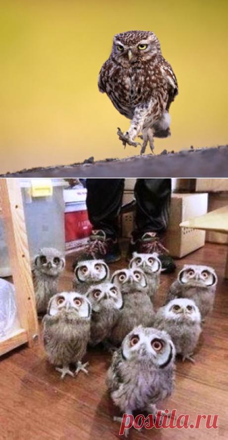 Рекомендуем пересматривать при плохом настроении — забавные фото, которыми совы определенно могут гордиться!