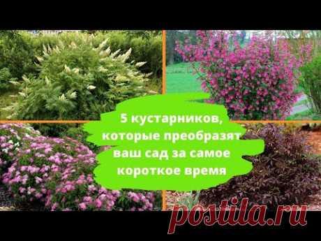 5 кустарников, которые преобразят ваш сад за короткое время