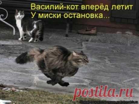 Новая и прикольная котоматрица (29 фото) Представляем вам очередную порцию замечательных фотографий с кошками и прикольными стишками и подписями!В этой коллекции: про кошек-математиков, охоту на мышей, кошачьи голосования, очаровательную аль…