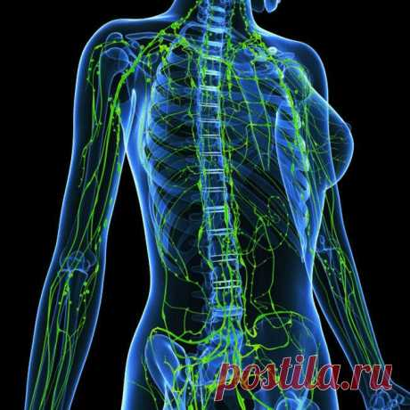 КАК УЛУЧШИТЬ РАБОТУ ЛИМФАТИЧЕСКОЙ СИСТЕМЫ - Советы и Рецепты Лимфатическая система представляет собой комплекс «дренажей» в нашем организме.Она состоит из лимфатических узлов, сосудов, селезенки и вилочковой железы. Лимфатическая система играет важную роль в борьбе с инфекциями и абсорбации жидкости, жиров и токсичных отходов в нашем теле. Как улучшить работу лимфатической системы Отсутствие физических нагрузок, дефицит йода, заболевания органов пищеварения или дисбаланс — все это …