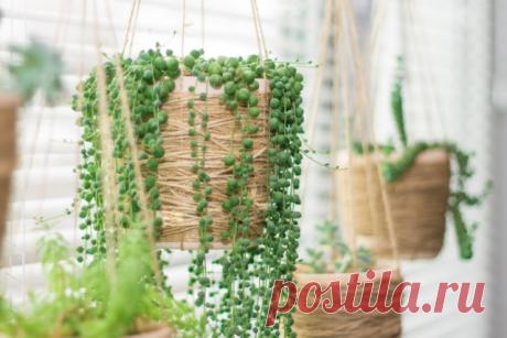 10 комнатных растений для южных окон