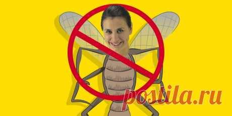 10 лучших народных средств от комаров и других насекомых - Лайфхакер