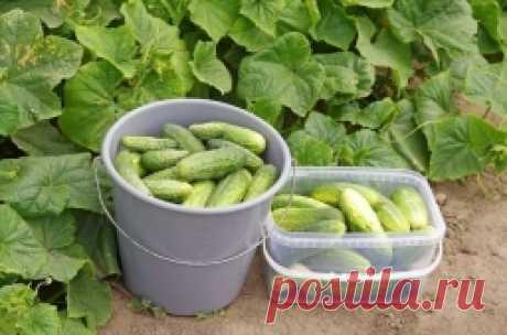 Лучшие удобрения для огородных овощей: полезные советы. - Садоводка