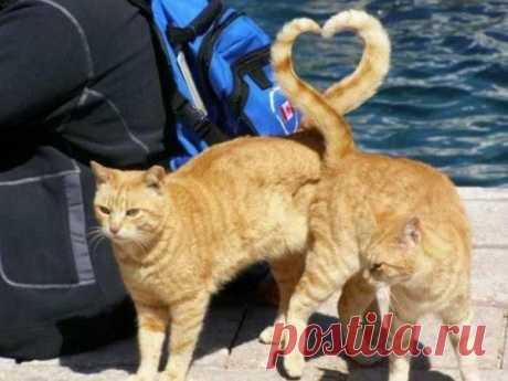 El amor rojo)