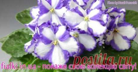 Статті про домашні рослини Догляд, рекомендації користувачів На сайті представлені колекції кімнатних квітів, безліч сортів з описом і порадами з розведення