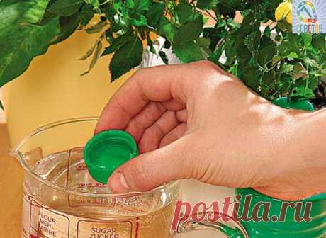 웃 7 ОТЛИЧНЫХ СОВЕТОВ :  Сохраните, чтобы не потерять.   СОВЕТ 1 : ЧЕМ ПОДКОРМИТЬ КОМНАТНЫЕ ЦВЕТЫ  Секрет роскошного комнатного цветника прост: растения нужно хорошо подкармливать, иначе не дождаться ни пышной листвы, ни хорошего цветения. Жесткая диета, когда растение длительное время испытывает нехватку питательных веществ, обычно приводит к заболеванию – ведь сил для сопротивления у растения нет. Но как правильно составить меню для зеленых питомцев, учитывая их разные вк...