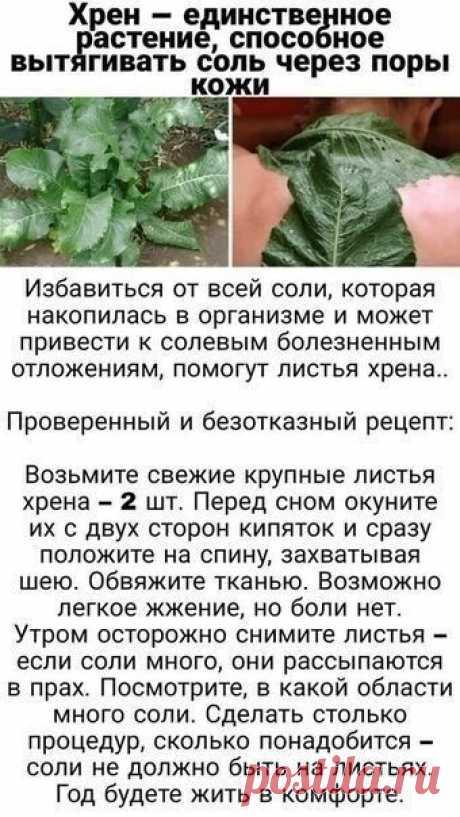 Лечение травами(хрен).удаление соли из организма