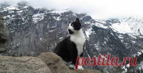 В швейцарских Альпах замечен кот-спасатель / Новости / Моя Планета