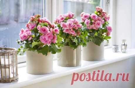 Самые красивые комнатные цветы в мире (40 ФОТО)