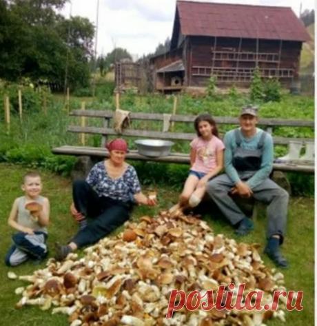 Как засеять дачный участок белыми грибами. 3 способа проверенные временем. И один общий недостаток | грибной критик | Яндекс Дзен