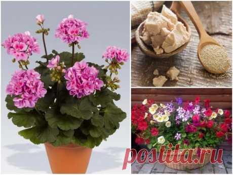 7 удобрений для комнатных растений, о которых вы не знали