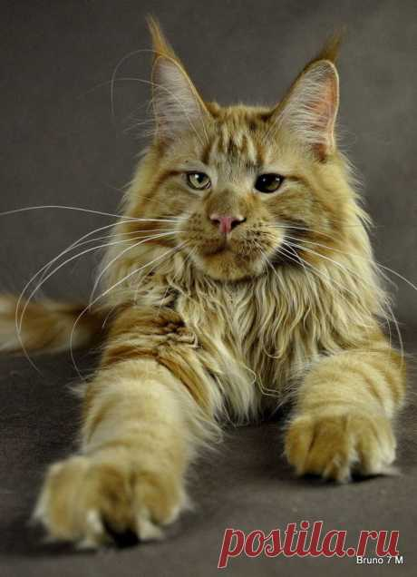 Cat - gorgeous picture » Sweet animals