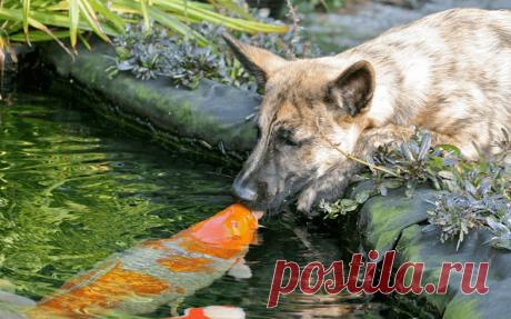 Стиль жизни: Хвостатая любовь: самые нежные фото животных