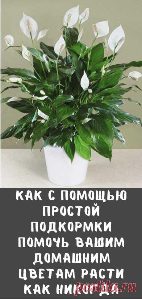 Как с помощью простой подкормки помочь вашим домашним цветам расти как никогда
