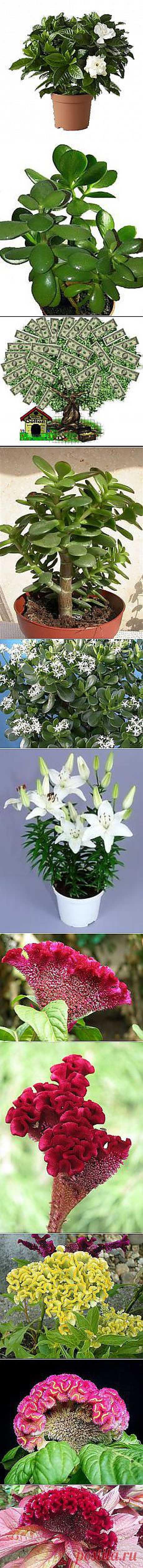 Галия Гарафеева: Комнатные цветы | Постила.ru