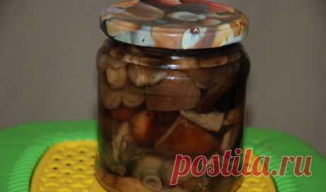 Как готовить свинушки на зиму: фото, простые рецепты приготовления грибов разными способами