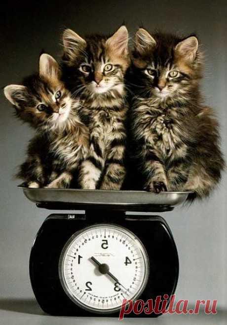 Сколько весят? | Kote.Rjaka.com