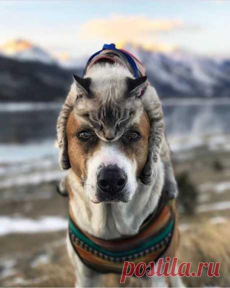 Фото Кошка лежит на голове собаки