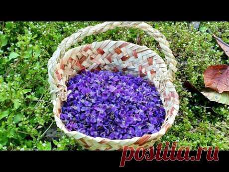 Варенье Из Фиалок  |  Bənövşə Mürəbbəsinin Hazırlanması | Violet Flower Jam