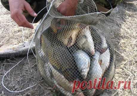 Почти браконьерская прикормка из трех компонентов | MASTER-FISHER.RU | Яндекс Дзен