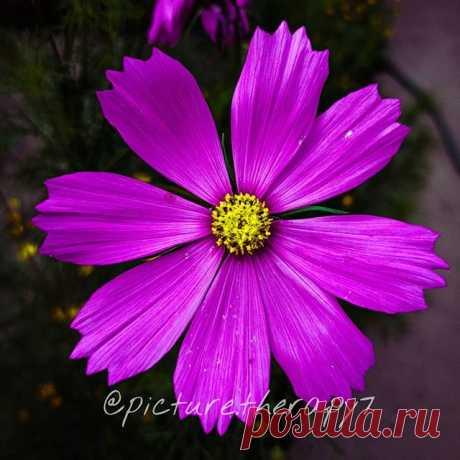 Photo by picture therapy in Kulgam. La imagen puede contener: flor, planta y naturaleza