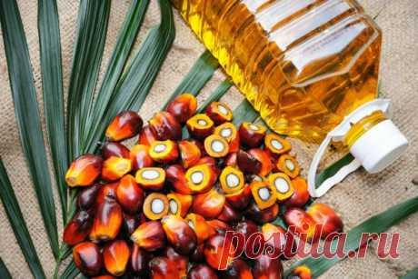 Вредно ли пальмовое масло для здоровья? — Вот действительно правдивый ответ