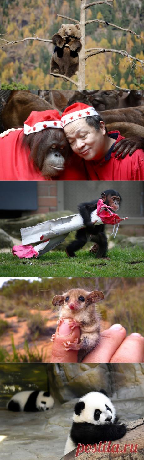 20 удивительных снимков самых интересных животных из разных уголков мира